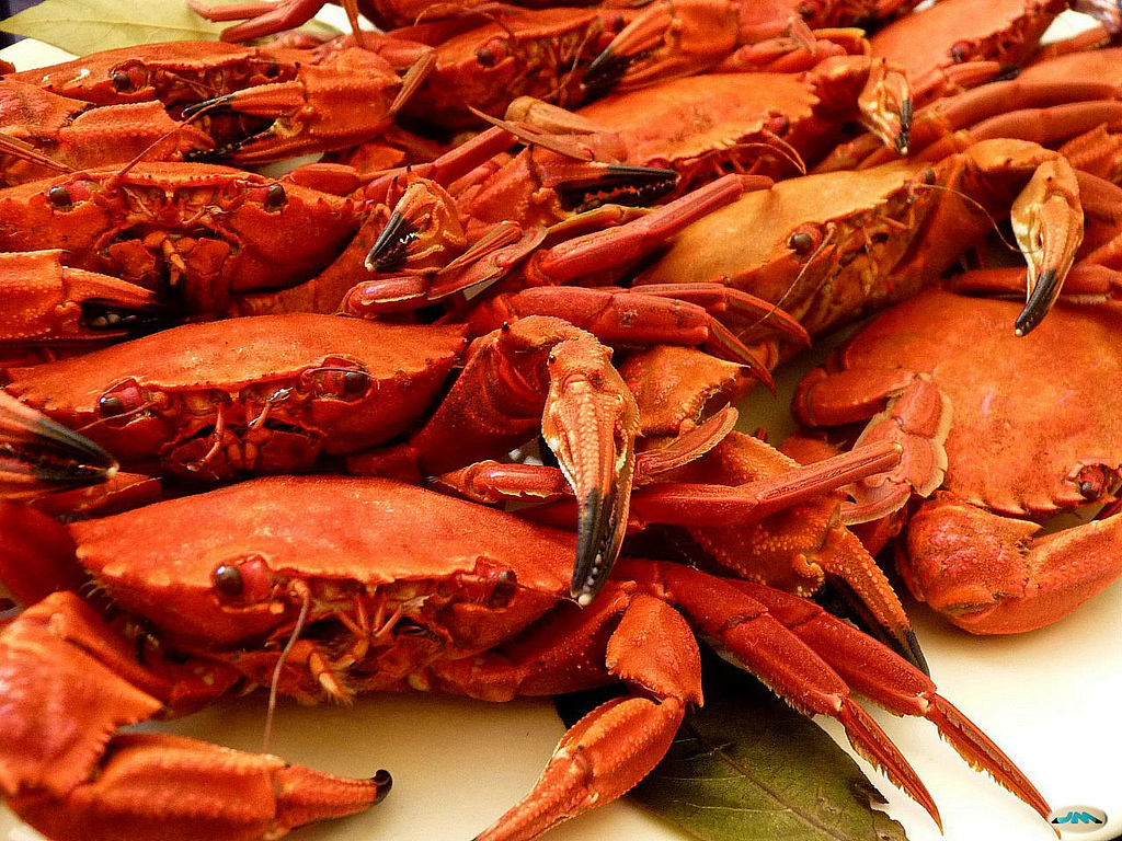 Enjoy the good seafood in Madrid in our La Casa Gallega.